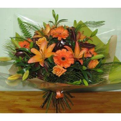 שמש כתומה - פרחים קוליברי - רמת גן
