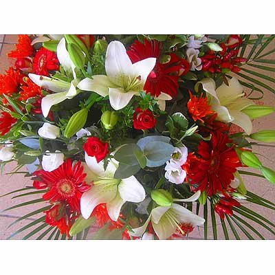 10 - פרחי שמש - אשדוד