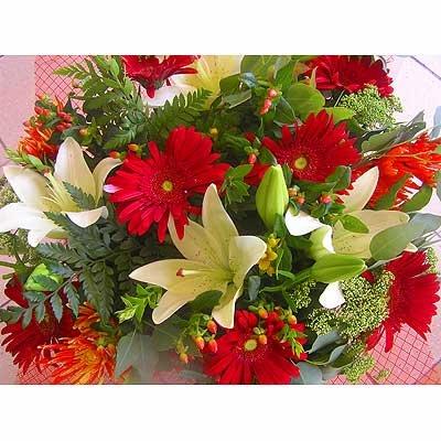 12 - פרחי שמש - אשדוד