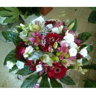 13 - פרחי סיתוונית - אשקלון
