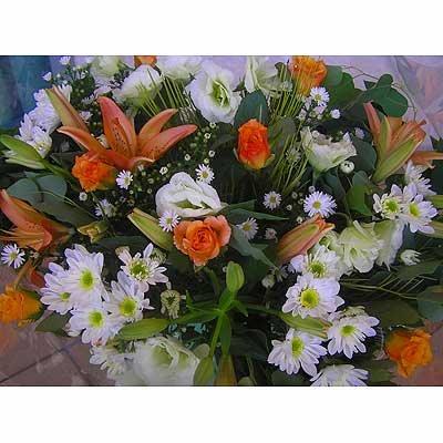 16 - פרחי שמש - אשדוד