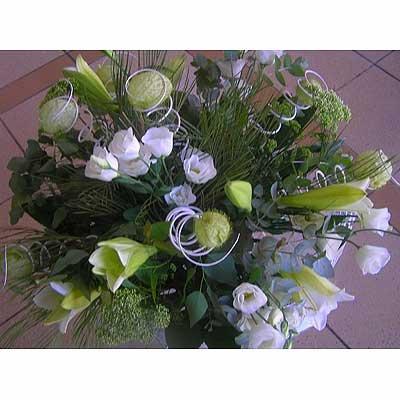 17 - פרחי שמש - אשדוד
