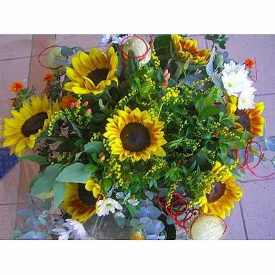 18 - פרחי שמש - אשדוד