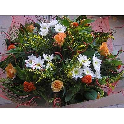 19 - פרחי שמש - אשדוד