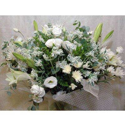 2 - פרחי שמש - אשדוד