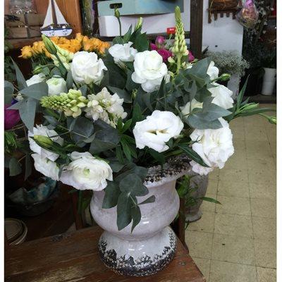 2 - פרחי סיתוונית - אשקלון