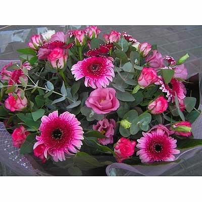 20 - פרחי שמש - אשדוד