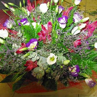 22 - פרחי שמש - אשדוד