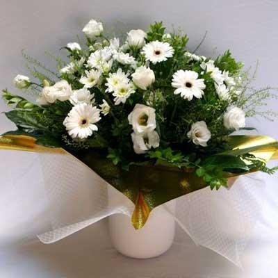 26 - פרחי שמש - אשדוד