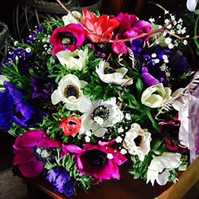 29 - פרחי סיתוונית - אשקלון