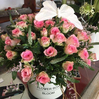 31 - פרחי סיתוונית - אשקלון