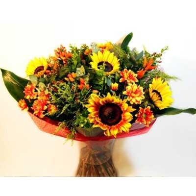 33 - פרחי שמש - אשדוד