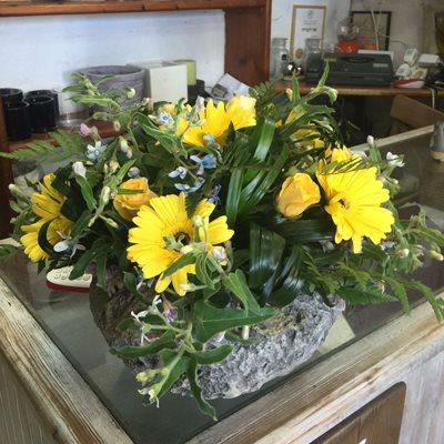 צהוב בוהק - פרחי סיתוונית - אשקלון