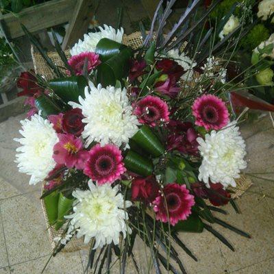 4 - פרחי סיתוונית - אשקלון