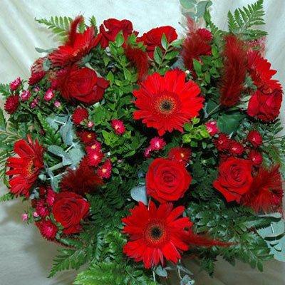 5 - פרחי שמש - אשדוד