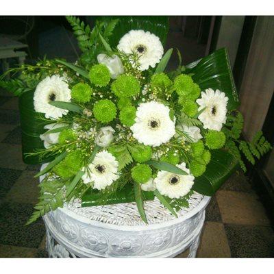 5 - פרחי סיתוונית - אשקלון