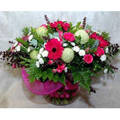 6 - פרחי שמש - אשדוד