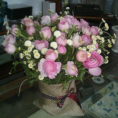 8 - פרחי סיתוונית - אשקלון