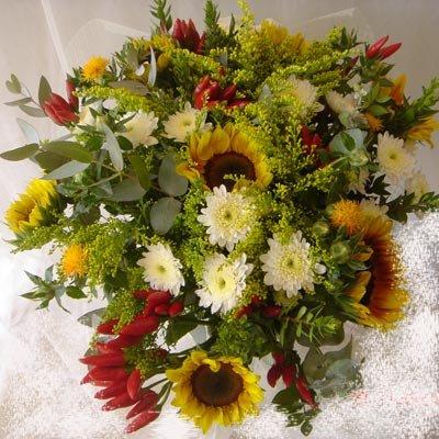 8 - פרחי שמש - אשדוד