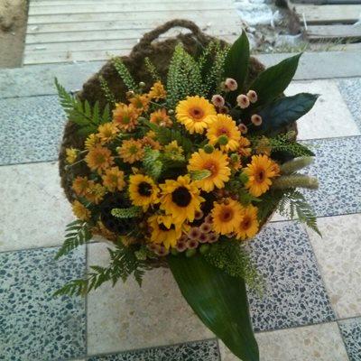 9 - פרחי סיתוונית - אשקלון
