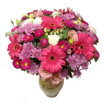 Rainbow - תלתן פרחים - צפת