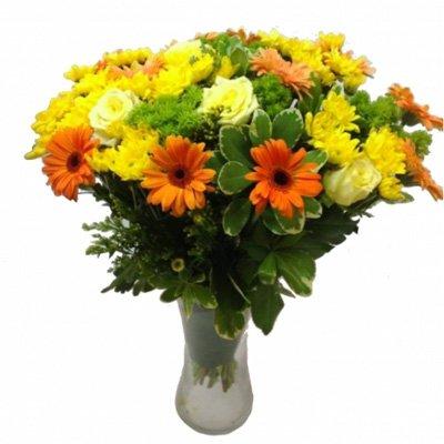 SUMMER - תלתן פרחים - צפת