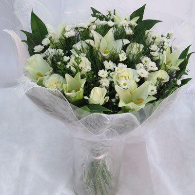 יפה כלבנה - פלורנס פרחים - נהריה