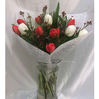 טוליפים אהובים - פרחי ונילה - ירושלים