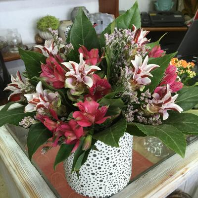 יום מקסים - פרחי סיתוונית - אשקלון