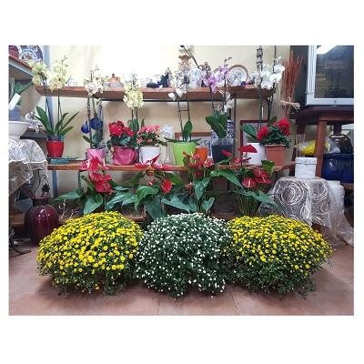 חנות פרח בר - פרח בר - עמק חפר