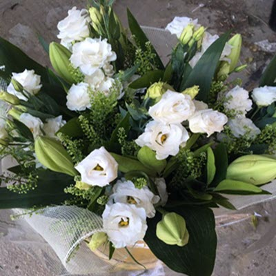 אהבה חלומית - פרח וסימפטיה - זכרון יעקב