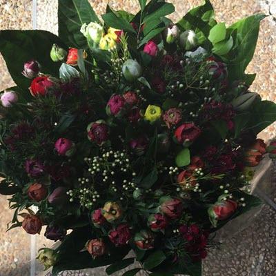 פינוק צבעוני - פרח וסימפטיה - זכרון יעקב
