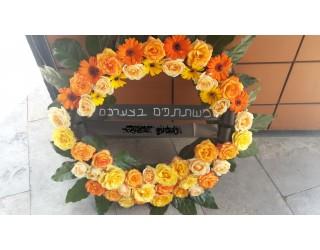 גלגל אבל - 4 - פרחים רמת החייל TLV - תל אביב