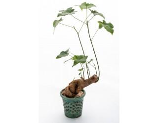 עץ אהבה - פרחים רמת החייל TLV - תל אביב