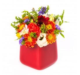 בוביק בכלי - פרחים רמת החייל TLV - תל אביב