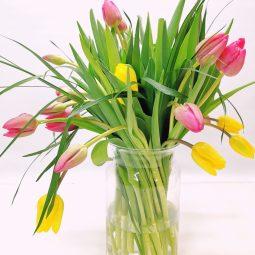 אביב באוויר באגרטל  - אורכידאה פרחים - חדרה