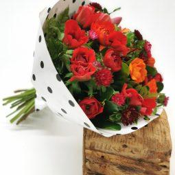 אביב פורח  - אורכידאה פרחים - חדרה