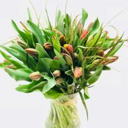 אהבה חורפית באגרטל - אורכידאה פרחים - חדרה