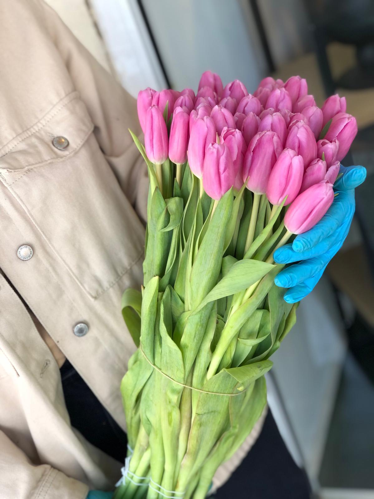 טוליפים של חורף - פרח באהבה - אילת